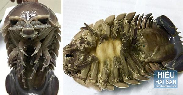 bọ biển