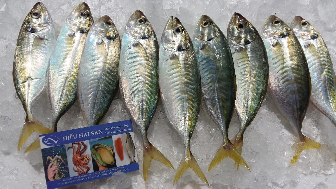 cá chỉ vàng cá ngân chỉ