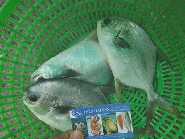 cá chim trắng