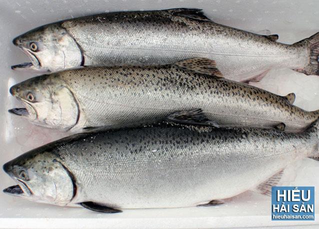 cá hồi phi lê nauy nhập khẩu