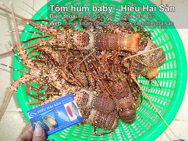 tôm hùm baby hiếu hải sản