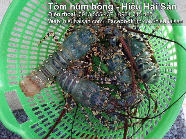 tôm hùm bông hiếu hải sản