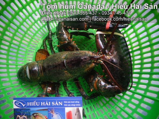 tôm hùm canada hiếu hải sản