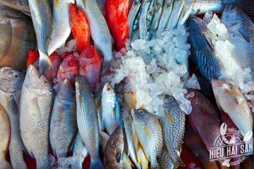 Cá biển đánh bắt trong ngày - hải sản tươi sạch